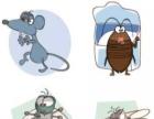 蟑螂老鼠防治专家,上门灭四害,进口药品安全环保