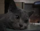 蓝猫宝宝找主人