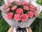 母亲节康乃馨花束 单支康乃馨 生日表白花束