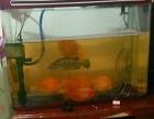 出售两个水族箱和一个鱼缸