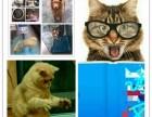 宠爱宠物托运中心 为您提供 诚信 便捷 安全.放心的托运方案