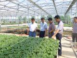 阳泉蔬菜生态智能连栋薄膜温室风机水帘标配控制厂家