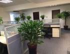 专业办公室 公司企业 绿植租摆 花卉租摆 租摆养护