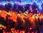 新年将至 装饰灯 数码管 投光灯 网灯 流星管灯