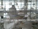 养殖批发市场,特价供应海量优质鸽子养殖、鸽子养殖设备、观赏鸽