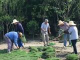 未来科技城绿化养护,老余杭草坪修剪,绿植租摆