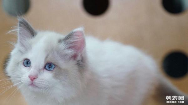 详情描述宠物照片 详情描述 我们是家庭猫舍小猫免疫和驱虫都已经做