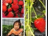 长沙农家乐一日游企业员工拓展培训草莓采摘就去胖仔农庄