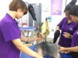 派多格 宠物美容师培训费用低品质高国家证书