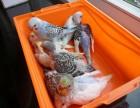 家里最近又出了许许多多雏鸟和幼鸟,想转让掉一些