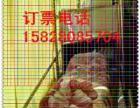 成都到哈尔滨的客车(汽车)几点发车/?多久到达-票价多少?