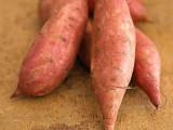 红薯种植合作社 宜昌烟薯25地瓜甘薯批发