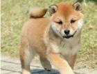 狗场直销各类世界名犬 健康质保 送货上门 可