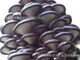 平菇菌棒 食用菌菌棒 食用菌菌种 平菇菌棒 蘑菇菌棒 灰黑色平菇
