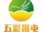 五彩米屯(2018年较火爆的平台)总部招商