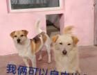 车公庄宠物寄养猫狗单独寄养长期寄养托管宠物可接送