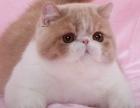 广州哪里有出售加菲猫 广州加菲猫一只多少钱