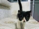 据说养猫的人幸福指数都比较高