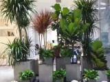 惠州龙门办公室植物租赁花卉租赁