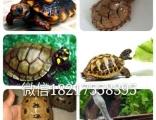 有各类乌龟有意来