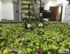国内优质品牌橄榄油批发采购