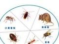 专业灭蟑灭鼠等有害生物防治