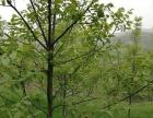 陕西省宝鸡市千阳县780亩林地转让