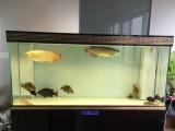 鱼缸厂家直销,定制各种尺寸,价格合理,欢迎选购