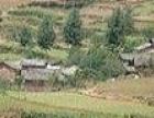 河北省邢台市新河县300亩旱地出租