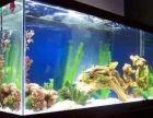 昆明专业保洁清洗鱼缸 鱼缸维修 鱼缸订做 鱼缸造景设计