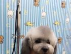 江门布布宠物美容专业店