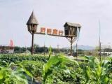 惠州野趣童行农家乐一日游,溯溪童话森林窑鸡烤全羊