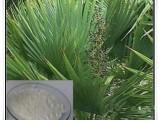 专业生产 锯叶棕提取物 锯棕榈 25% 45%总脂肪酸