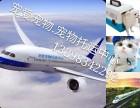 郑州宠物托运专业、安全、快捷、24小时免费去接