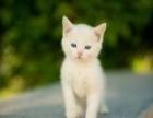 活泼可爱的小猫咪找新家了,快来抱走吧