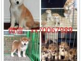 南昌狗场直销各类名犬,300起售