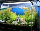 北京專業清洗魚缸 觀賞魚租擺 更換過濾器材魚缸清洗