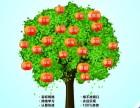 西南财经大学网络教育2018春季招生简章