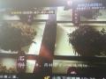 海信电视液晶