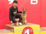 蘇州寵物犬狗拍電影廣告電視劇 寵物貓拍攝廣告