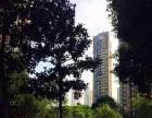 红谷凯旋 精装两房 清爽大方 拎包入住 房东自住房