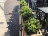 业绿植租摆绿化养护办公室植物租赁花卉租赁