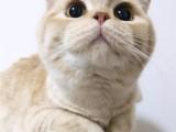 杭州本地出售加菲 布偶 蓝猫 美短 欢迎上门 可送货上门