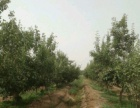 吐鲁番周边 土地 40000平米