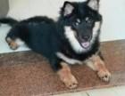 惠州市惠东县象山路寻找爱犬