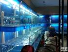 承接土建海鲜鱼池工程鱼缸海鲜价格现场设计制作优质做工质量美观