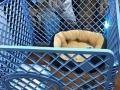宠物狗中号笼子栅栏