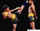BJ搏击成人少儿跆拳道拳击散打格斗全能武术培训班