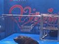 海狮表演出租哪里有海洋生物水母展大型鱼缸租赁