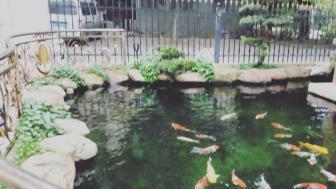 专业上门清洗鱼池鱼缸,鱼病防治